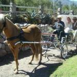 wedding_carriage_2